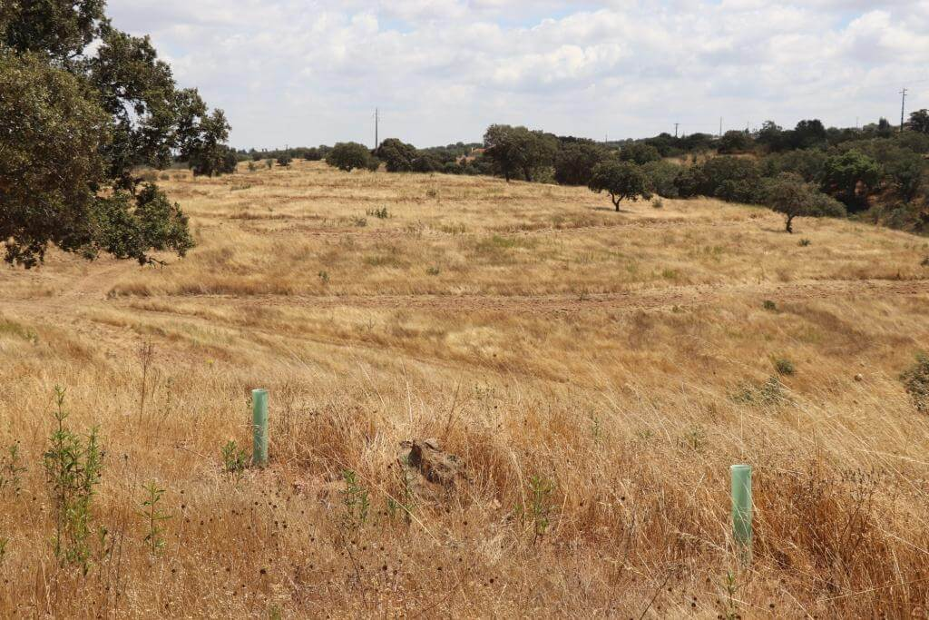 13 Hectares Agriculture or Tourism near Comporta
