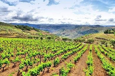 Alentejo Property and Farms