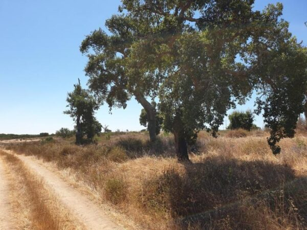 Land for agriculture near Comporta 1