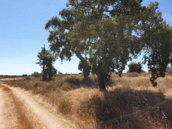 Terreno para agricultura cerca de Comporta 1