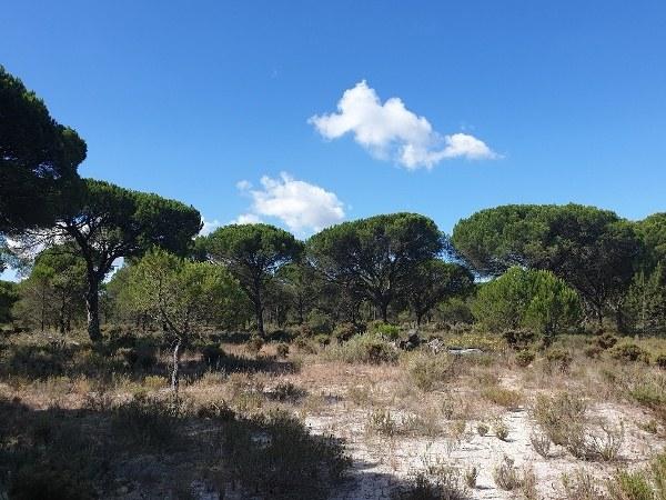 15ha Land in Comporta 1