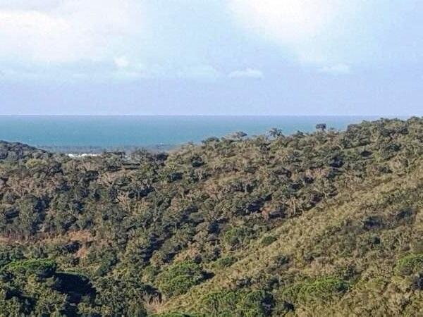 60ha Vista Mar cerca Melides 1