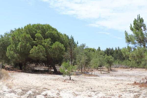 2.5ha near Melides Beach for Tourism