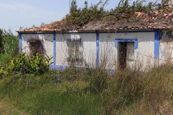 4ha cerca de la playa de Melides
