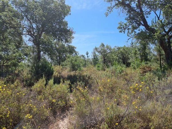 land for sale in melides portugal